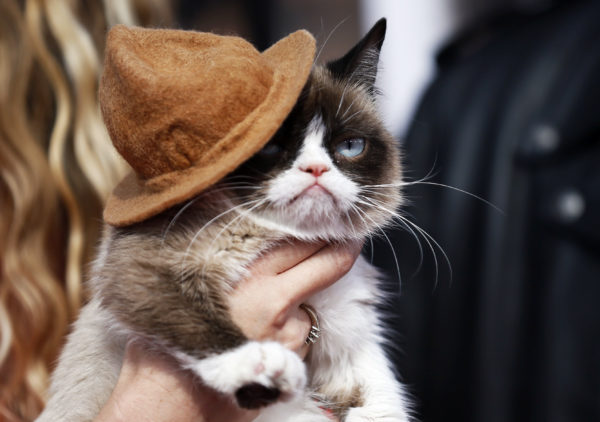 Grumpy cat arrives at the 2014 MTV Movie Awards in Los Angeles, California. Photo by Danny Moloshok/Reuters