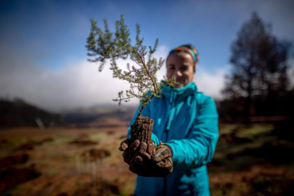 A volunteer holds a sapling. Photo by Desiree Martin/AFP via Getty Images